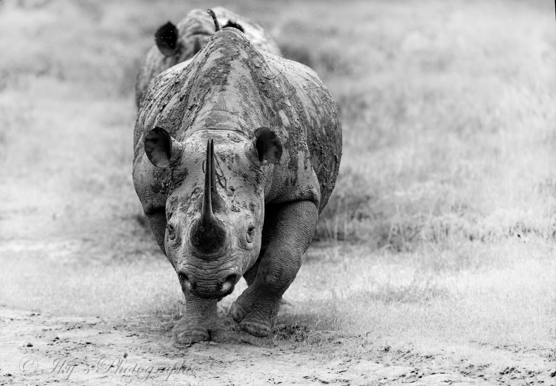 Shamwari Pro Photo rhino image