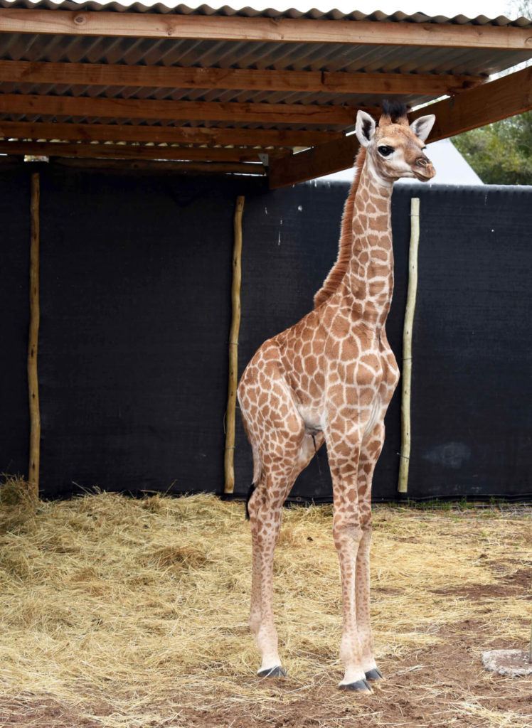 , The Animals at our Animal Rehabilitation Centre