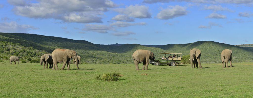 A-Shamwari-game-viewing-vehicle-drives-past-an-elephant-herd